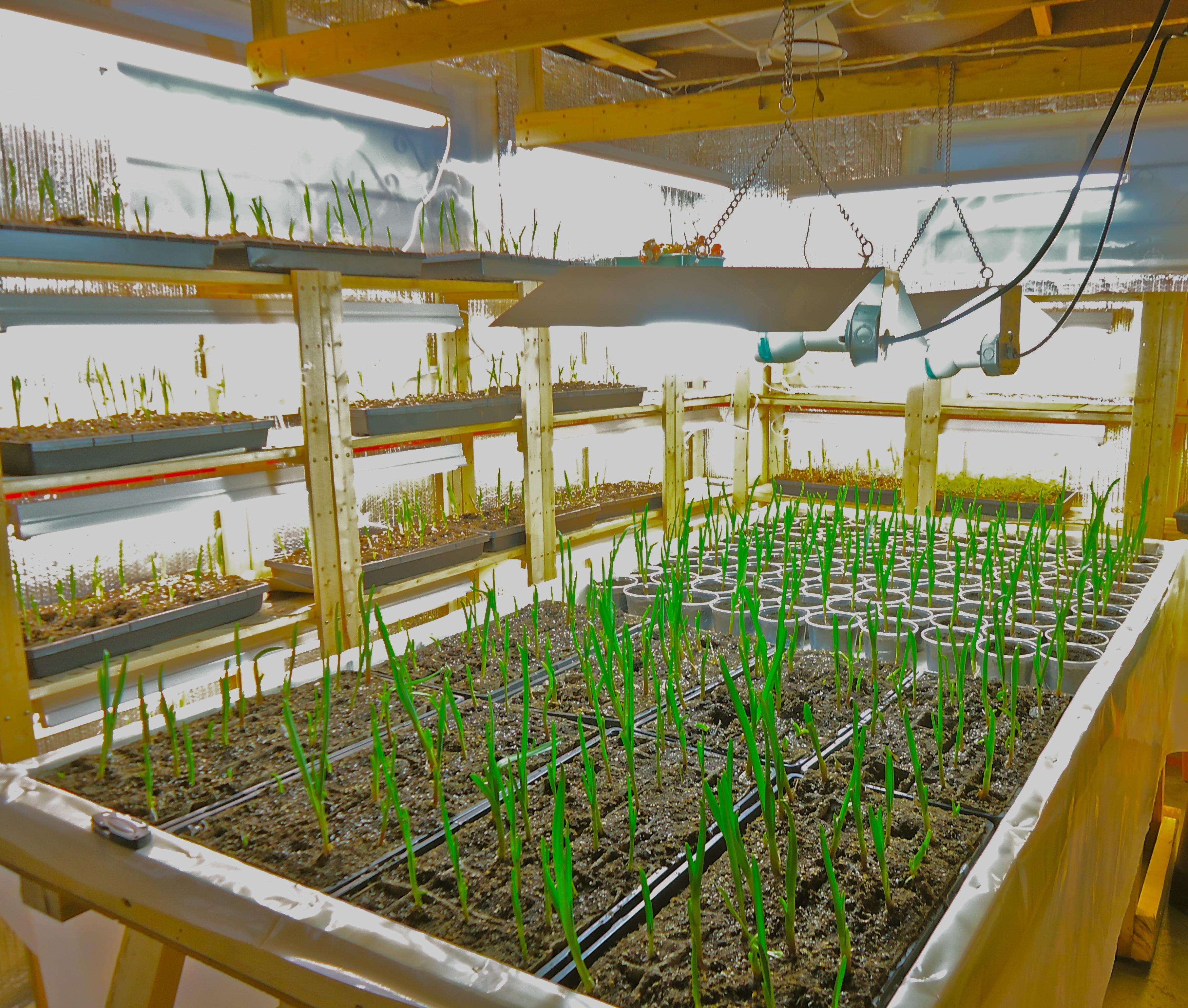 com remodel decosee room fantastic basement grow game