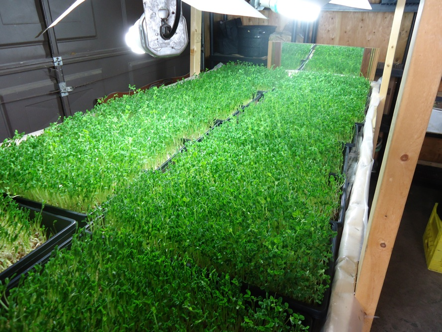 indoor growing SPIN Farming A New Way to Learn to Farm
