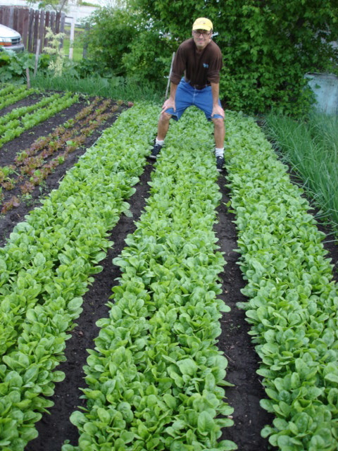 SPIN photo Wally straddling spinach beds