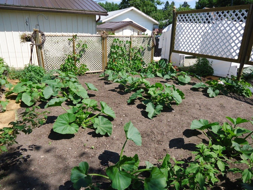 SF photo theme garden squash 500 sf $500