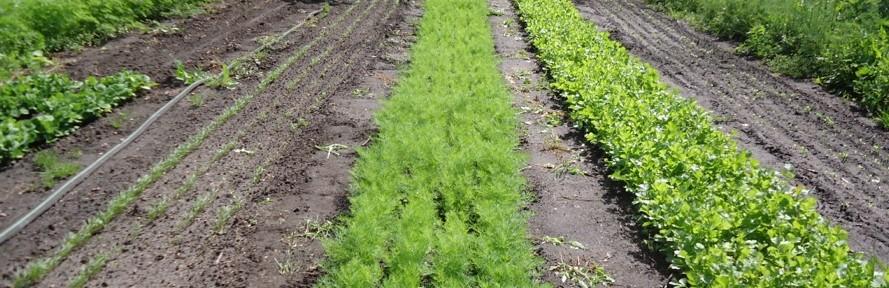 Jumpstart an Herb Business on 1,200 Sq. Ft.
